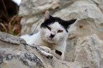 Боевая кошка
