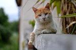 Еще одна боевая кошка