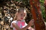 Лиза на Земляничном дереве