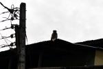 Обезьянка на крыше