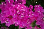 Вот такие они, мелкие цветочки