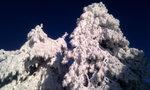 Вот такие вот деревья на вершинах
